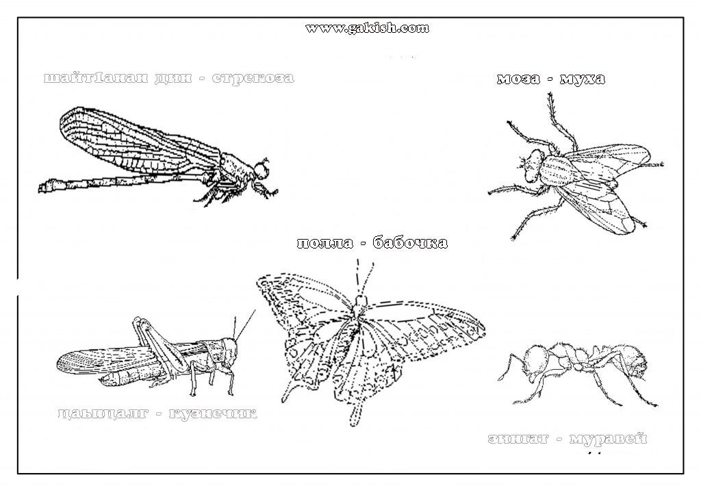Раскраски насекомые чеченский язык