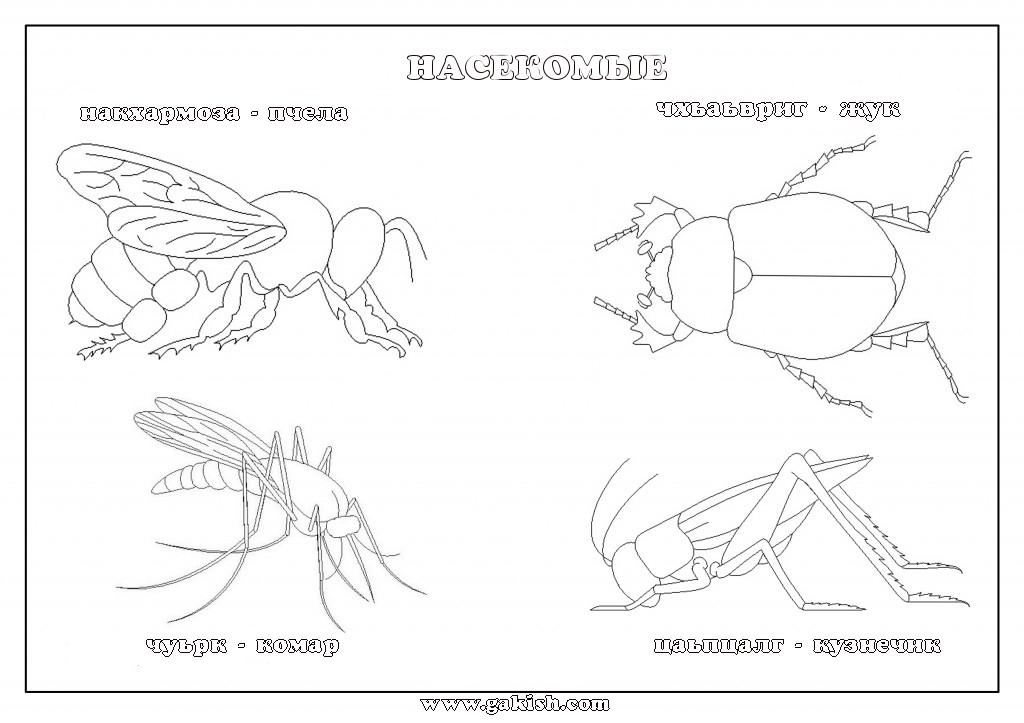 Раскраски насекомые для детей