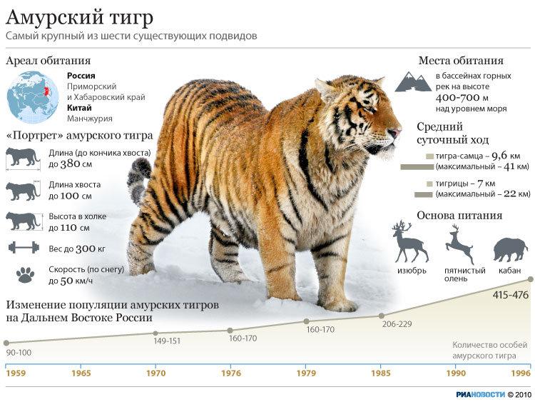 Амурский тигр доклад