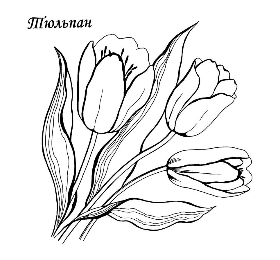 Скачать раскраски цветов — тюльпан