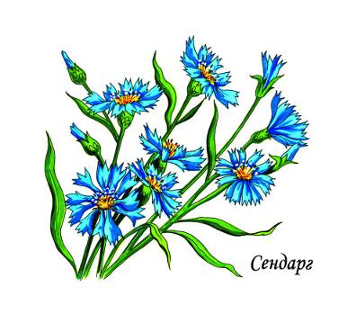 Раскраски для девочек, раскраски цветы, как раскрашивать цветы,  раскраски с примерами, раскраски, раскраска бесплатно разукрашки