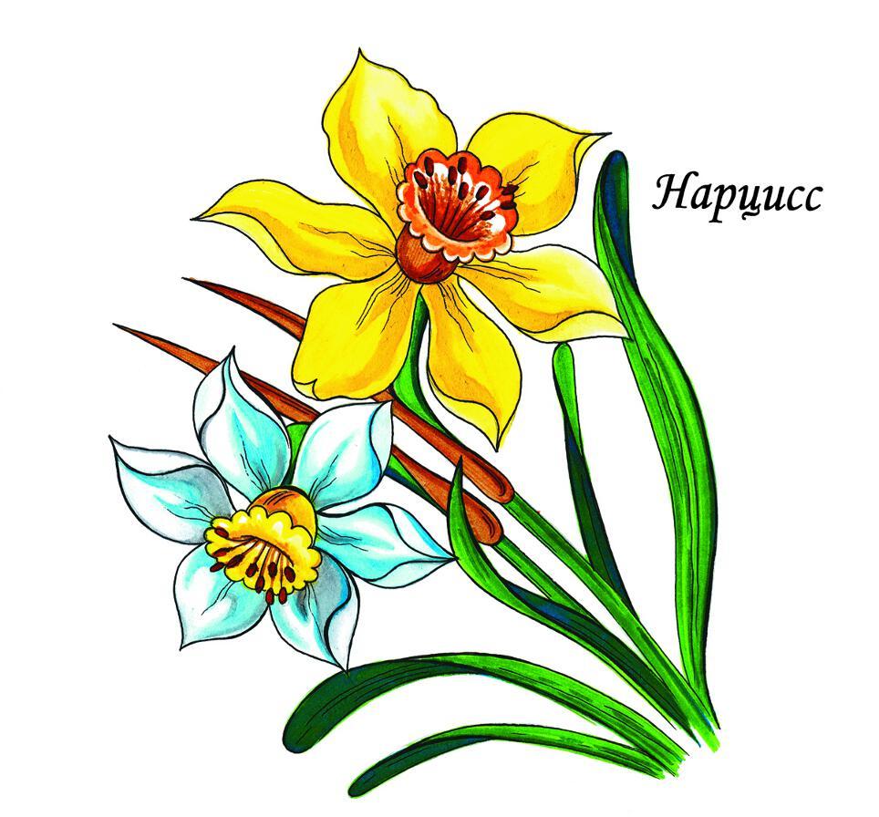 Скачать раскраски цветы — раскраска
