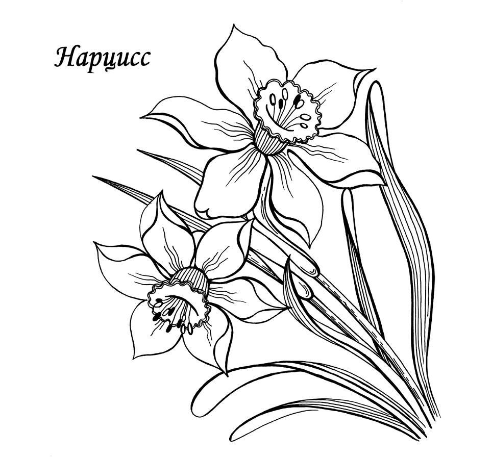 Раскраски цветы | Чеченский сайт для ...: www.gakish.com/raskraski/raskraski-cvety.htm