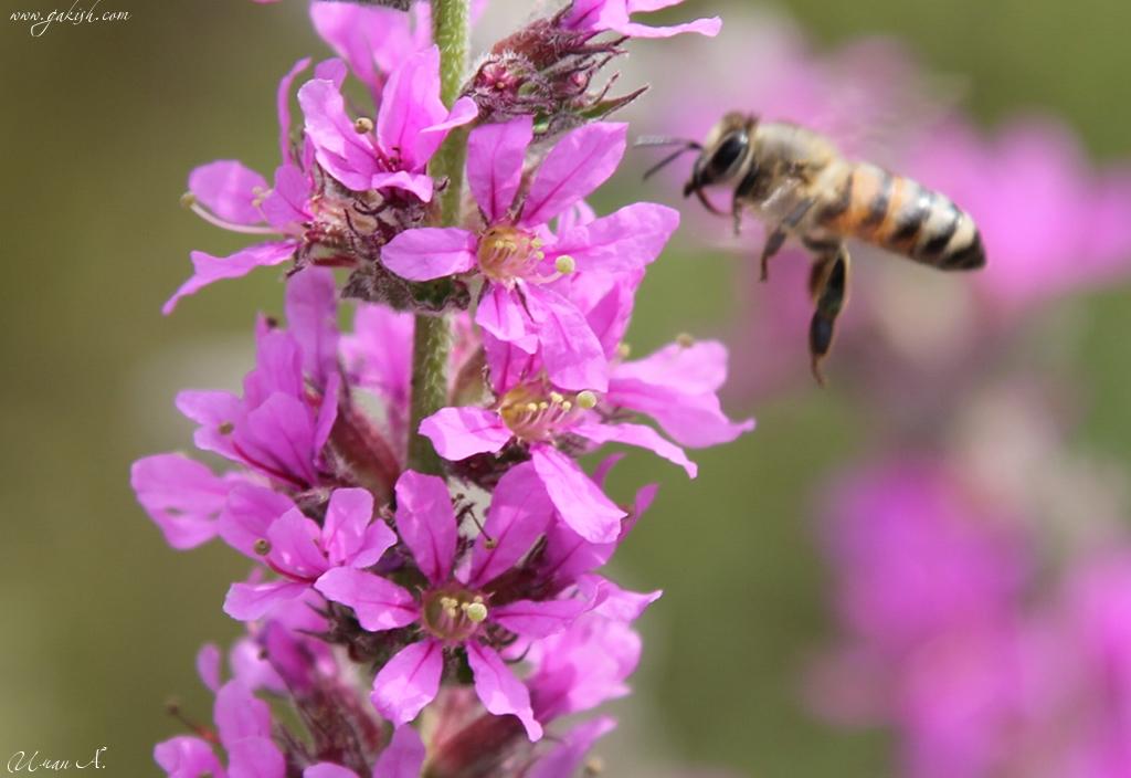 Чечня фото насекомые кавказа, природа