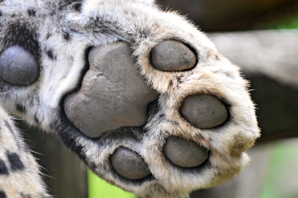paws-02
