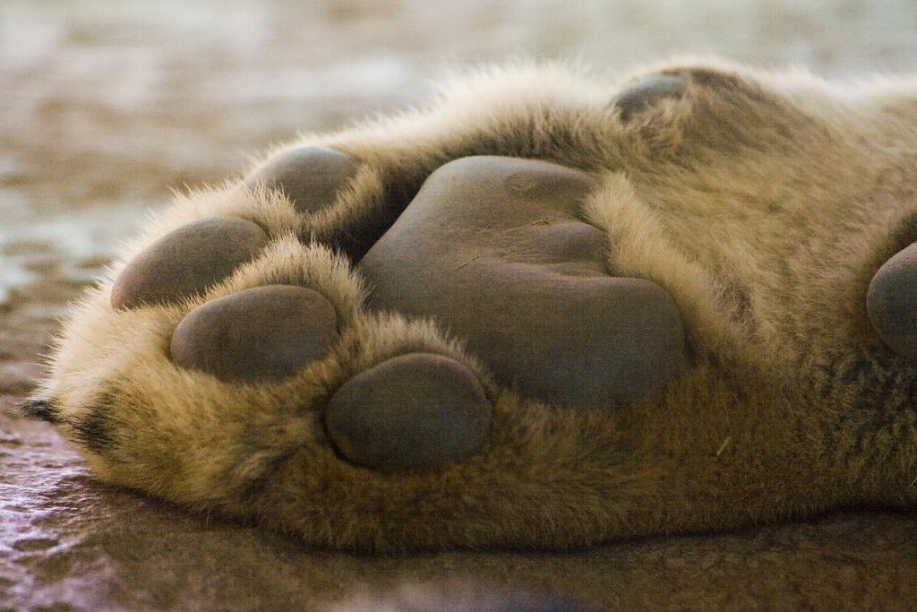 paws-03