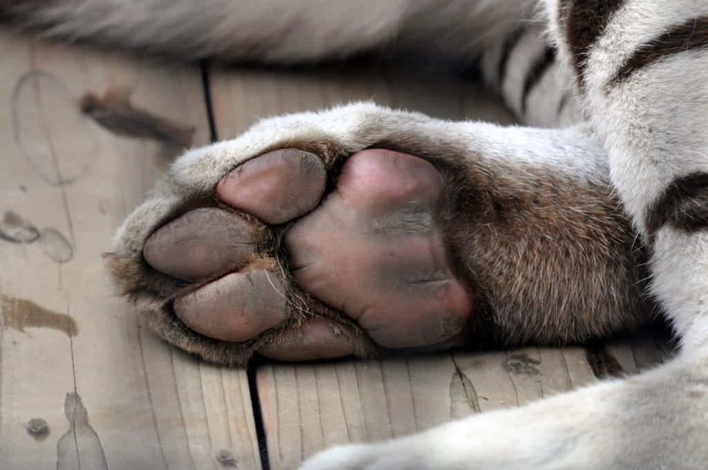 paws-04